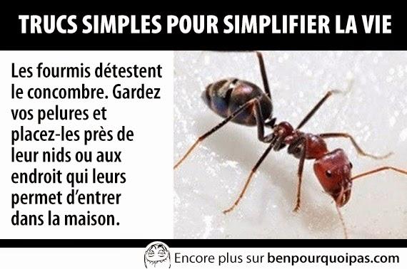 trucs-pour-faciliter-la-vie-plus-de-fourmis