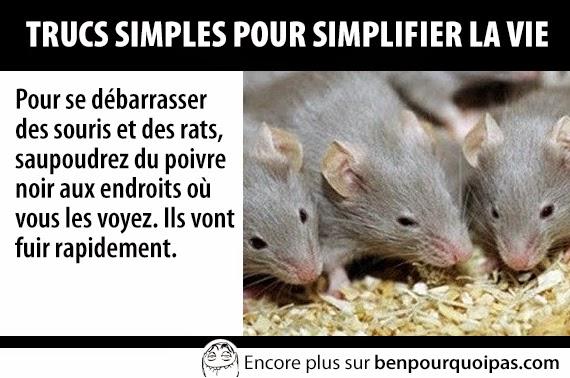 trucs-pour-faciliter-la-vie-pour-les-souris
