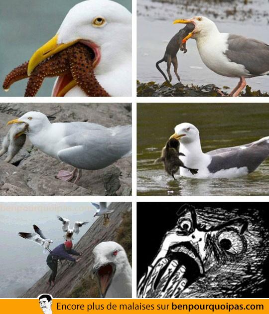 domination des oiseaux