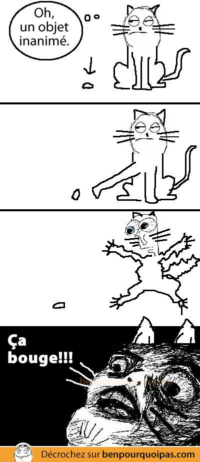 Ben pourquoi pas - Les chats et les objets immobiles