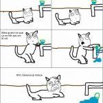 Le chat et le verre d'eau