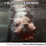 J'ai trouvé Nemo!!
