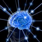 Le cerveau est un organe incroyable!