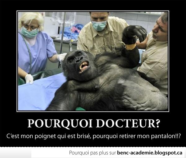 Gorille se débat sur une table chez le vétérinaire