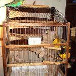 L'oiseau a piégé le chat dans une cage!