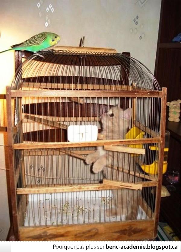 Le chat est dans une cage et l'oiseau regarde