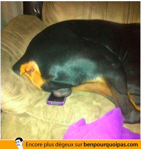 Quand les boules de ton chien reposent sur ton mobile, tu laisse l'appel aller en voicemail!