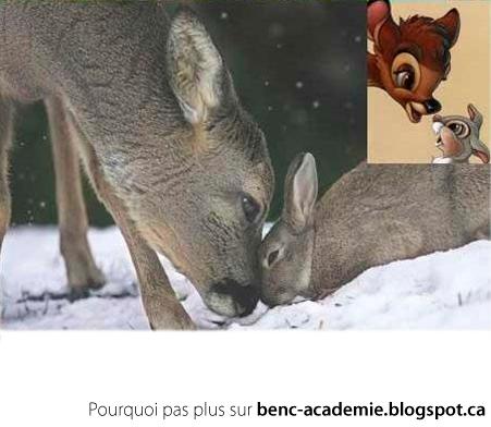 Bambi et Pan Pan dans la vrai vie