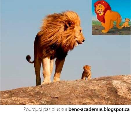 Le roi lion dans la vrai vie