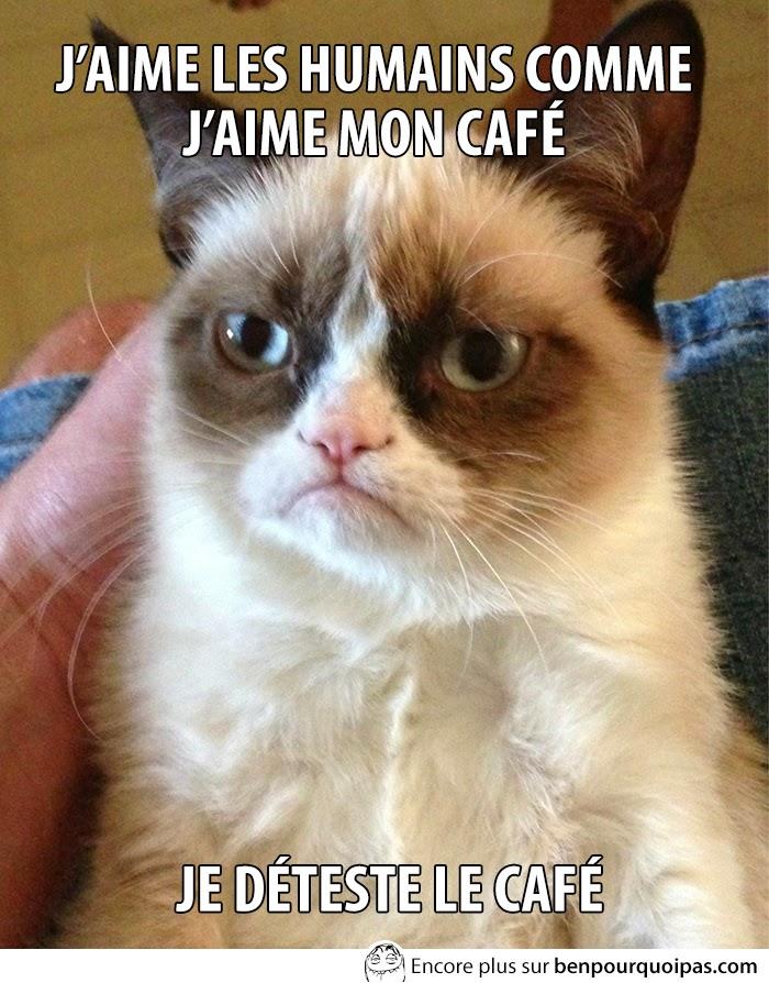 grumpy cat aime pas les humain