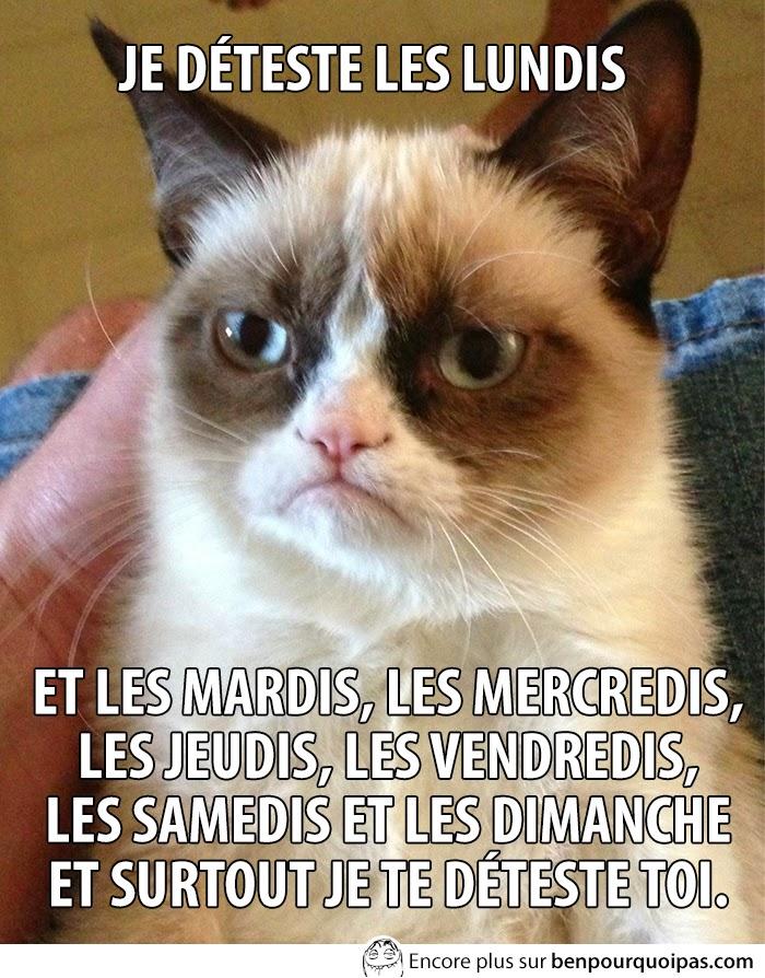 grumpy-cat-je-deteste-les-lundis