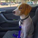 Le moment ou il a réalisé qu'on va chez le vétérinaire!