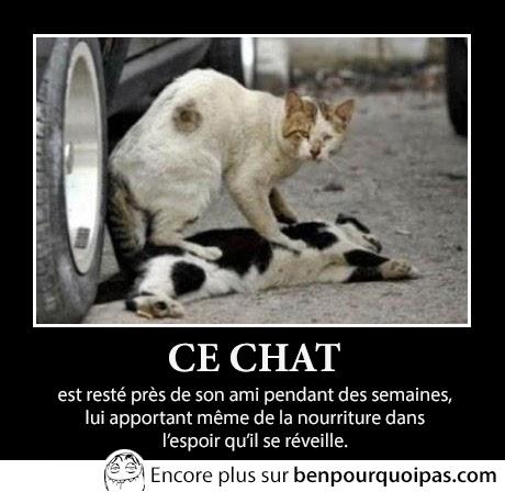le chat et son ami mort