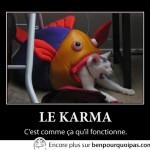 Le karma et le chat
