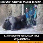 Emmener les enfants au zoo