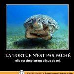 La tortue n'est pas faché, elle est décue