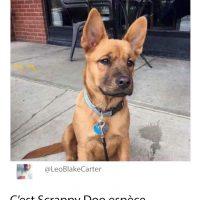 Scooby Doo ou Scrappy Doo...