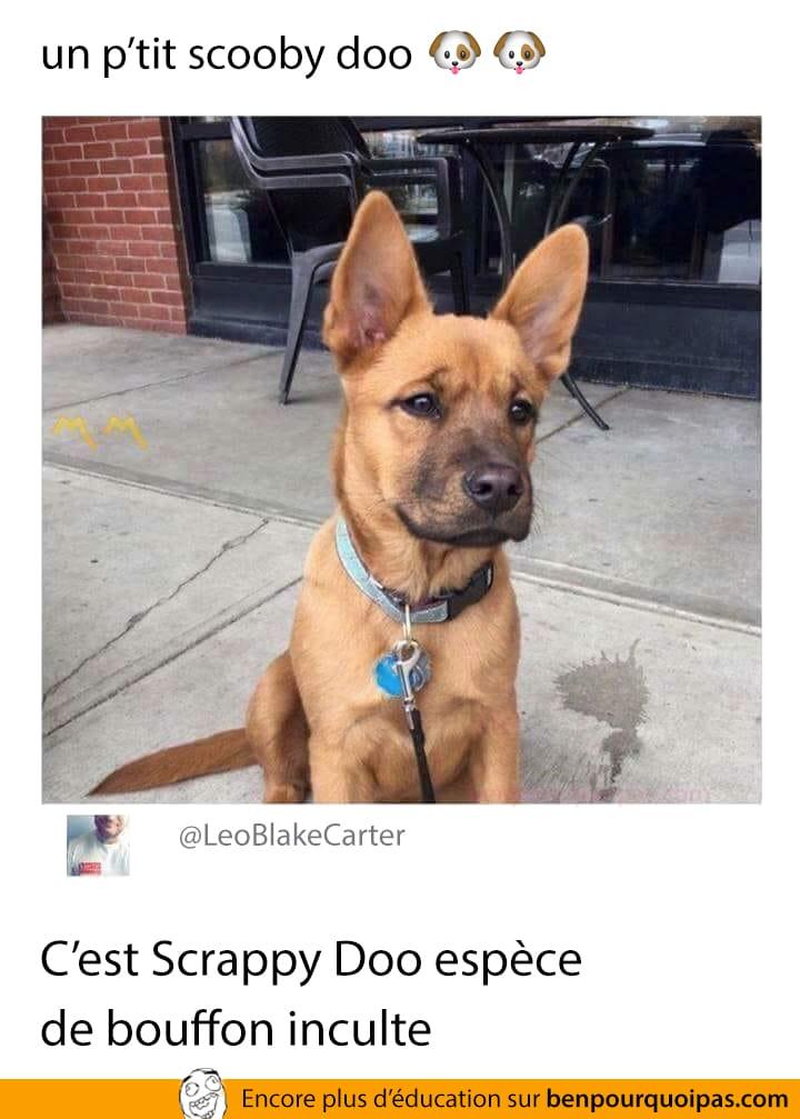 Un p'tit Scooby Doo...