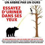 Truc si vous êtes coincé dans un arbre par un ours, urinez lui dans les yeux!