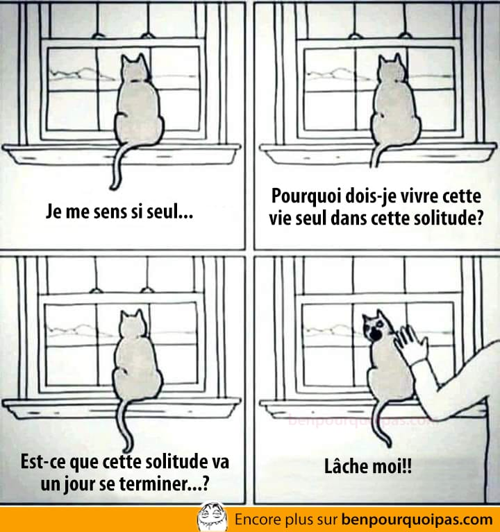 Le chat, animal solitaire et si seul