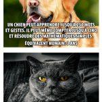 Différence entre les chiens et les chats