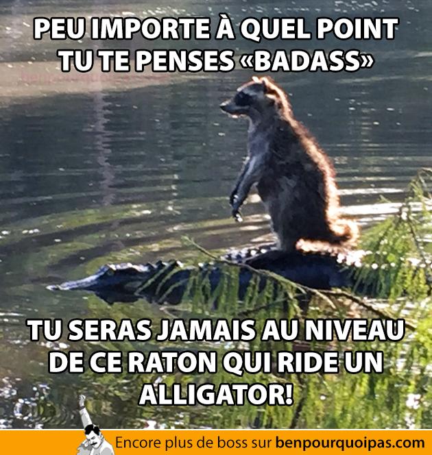 Tu seras jamais aussi badass que ce raton qui navigue sur un alligator