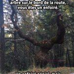 Un arbre terrifiant sur le bord de la route… génial!
