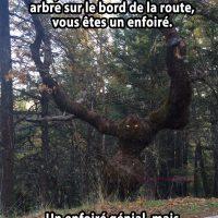 Un arbre terrifiant sur le bord de la route... génial!