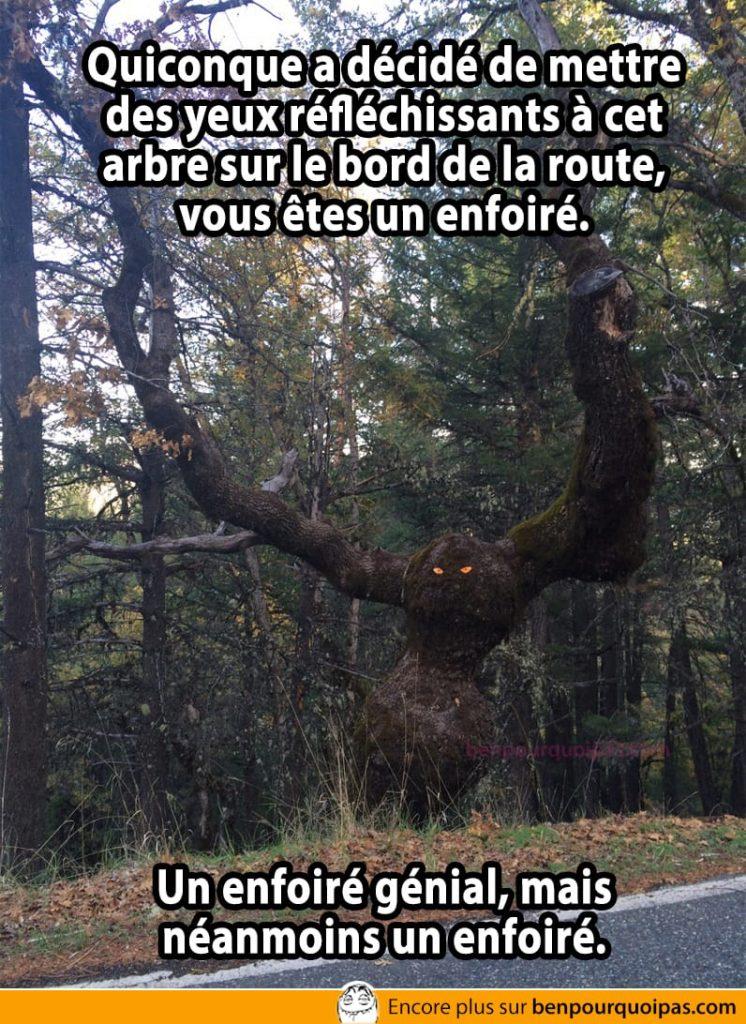 Quiconque a décidé de mettre des yeux réfléchissants à cet arbre sur le bord de la route, vous êtes un enfoiré. Un enfoiré génial, mais néanmoins un enfoiré.