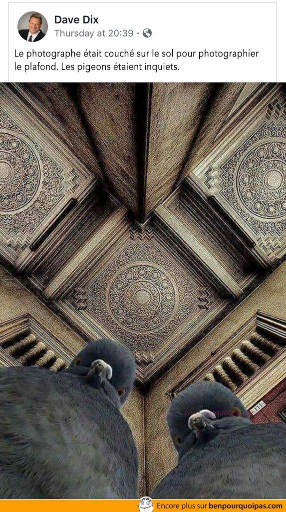 Photographe au sol, les pigeons sont inquiets...