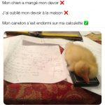 Un caneton endormis sur les devoirs | ben pourquoi pas humour