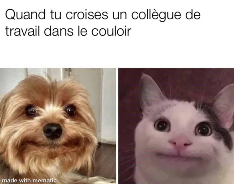 un chien et un chat avec une face malaisante