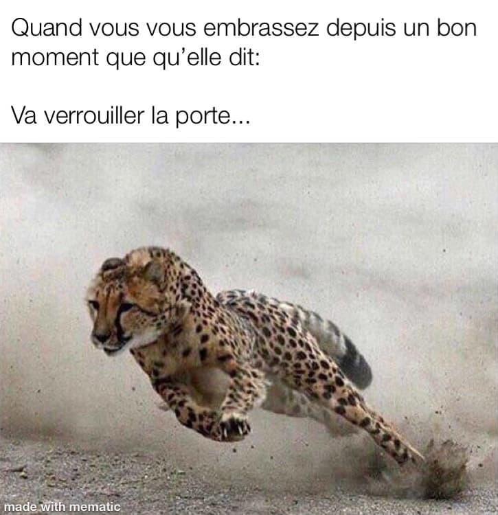 Un guépard qui cours