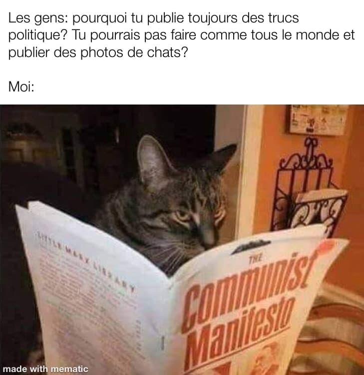 Un chat regarde un manifeste communiste