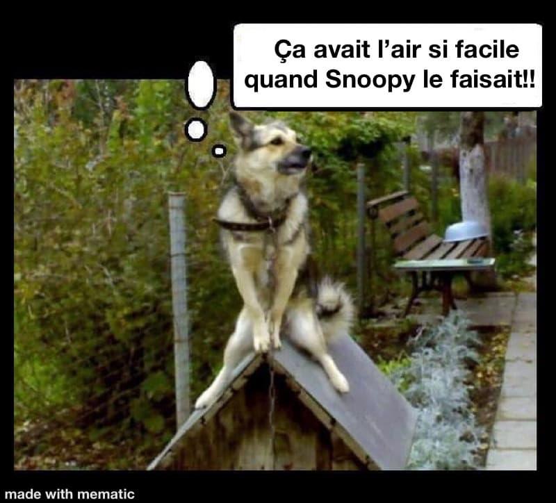 chien assis sur le toit de sa niche snoopy