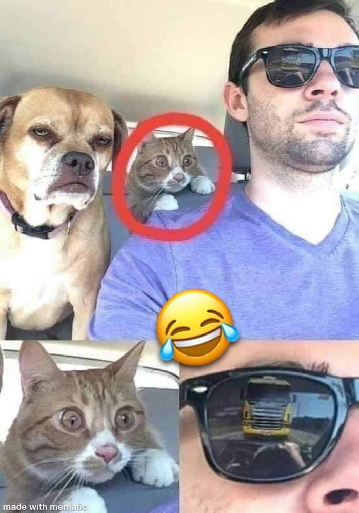 Un gars conduit une voiture avec son chien et un chat un peu nerveux