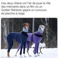 Casting parfait pour un film de chiens