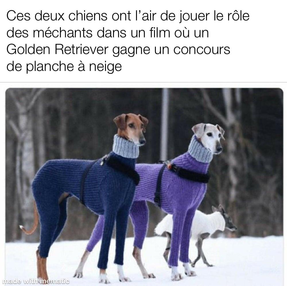 un couple de chien bien habillés pour l'hivers