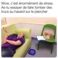 Un chat psychologue donne des conseils pour contrer le stress