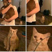 Quand le chat se sens délaissé...