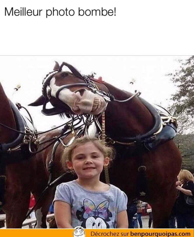 Quand un cheval te photobomb