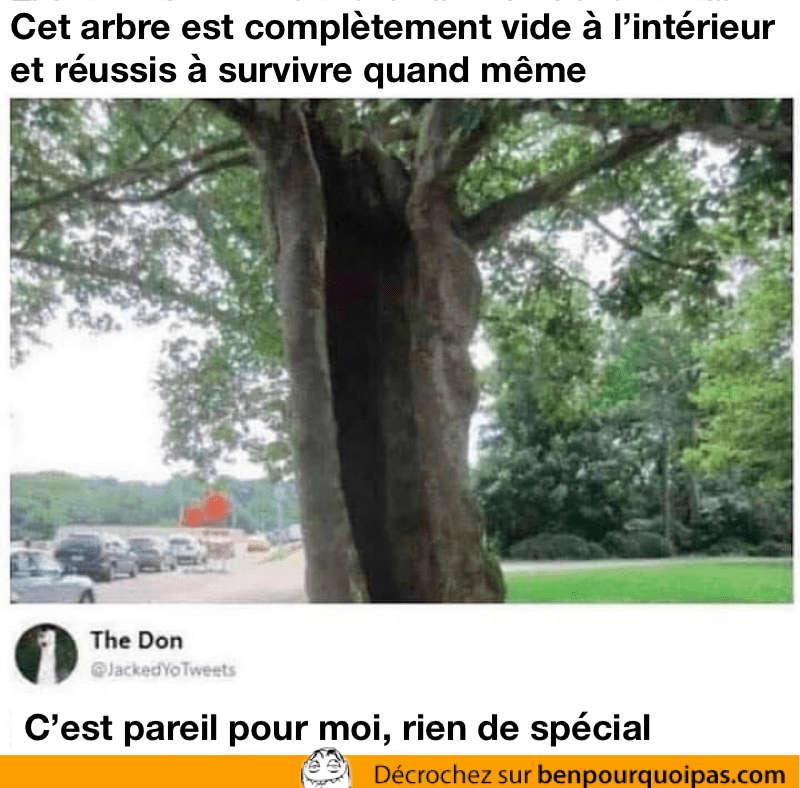 Un arbre qui est complètement vide à l'intérieur peut survivre