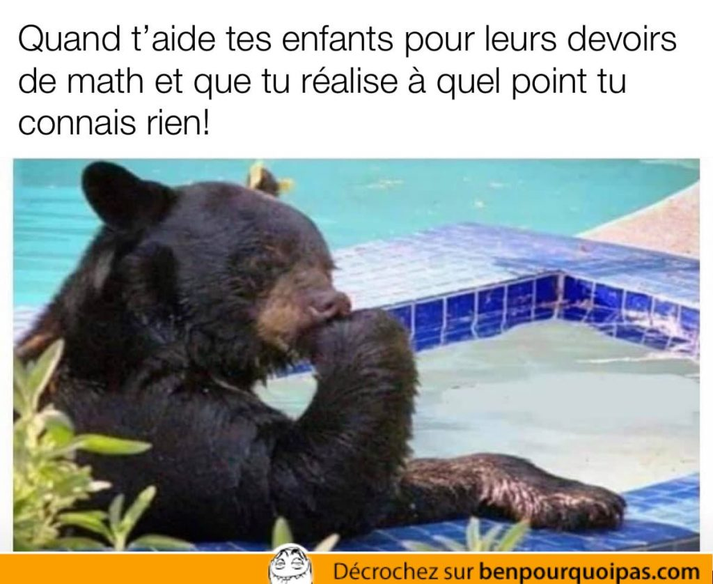 un ours à l'air de réfléchir