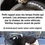 Les animaux qui ont froids se réfugient sur vos voitures