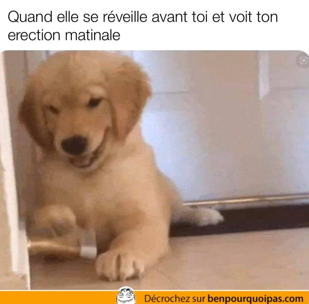 un chien joue avec le stopper de la porte