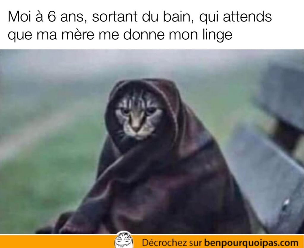 chat enveloppé dans une serviette