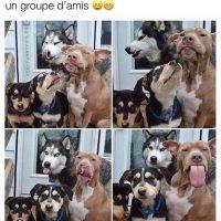 Quand tes amis et toi voulez prendre une photo