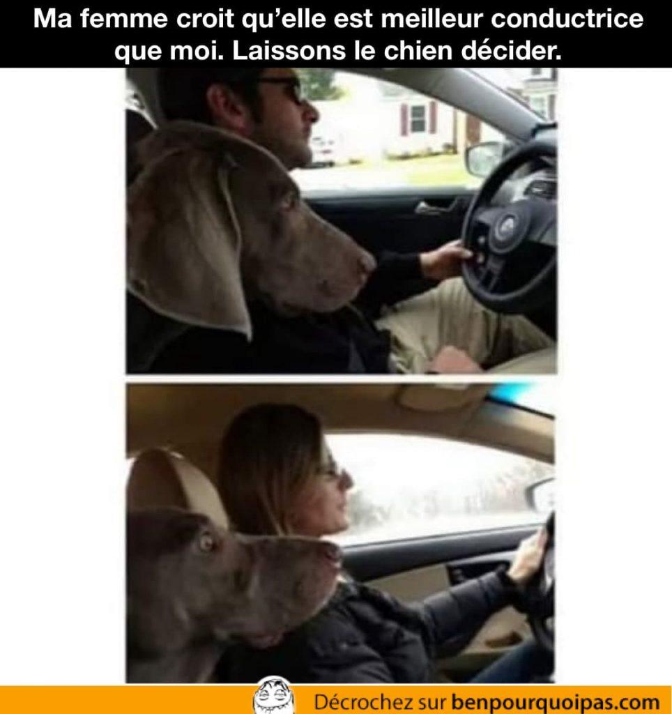 un chien défini qui conduit le mieux entre un homme et une femme