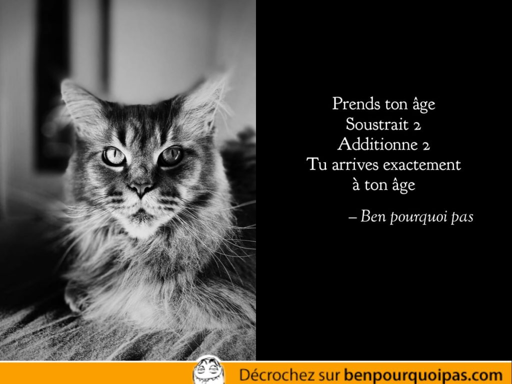 un chat sage dans une citation absurde