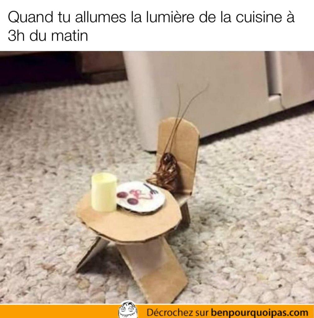 une coquerelle est assises devant un repas